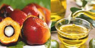 Edible_Oil_Purification