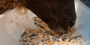 BioAg_animal-feed