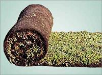 200x147_景天属植物草毯